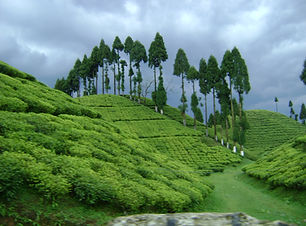 Darjeeling taxi tour package.JPG