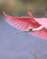 birding in beaumont.jpg