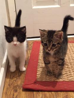 Tessa- Angelica and Bub