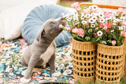 Titus smelling the flowers
