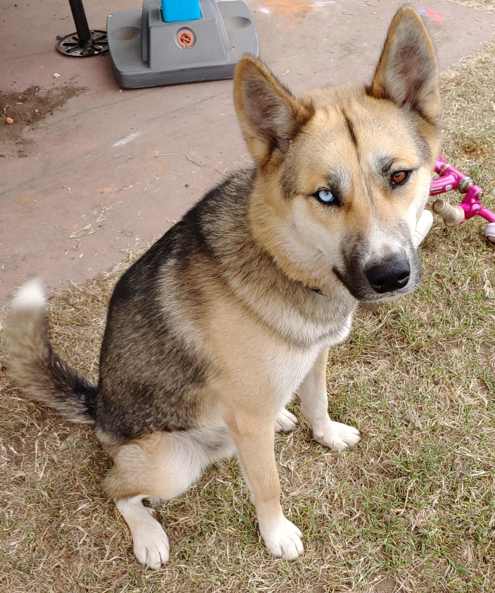 Dog Adoptions Santa Barbara | Spark Rescue | Santa Barbara