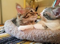 Laura- le tigre and Booo