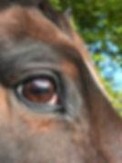 Afbeelding bij paardencoach | Narcismevrij.horse