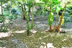 Trilha em Bosque
