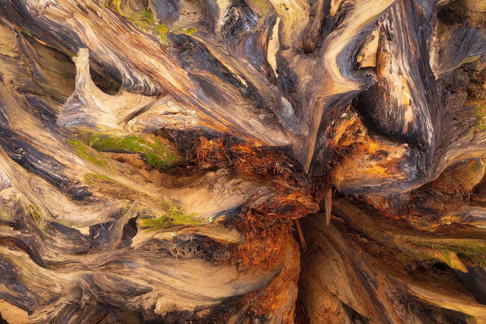 Butress Tree
