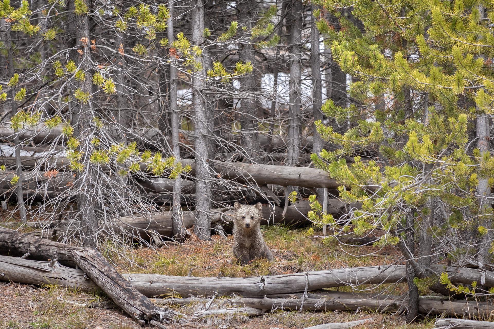 Little Bear Big World