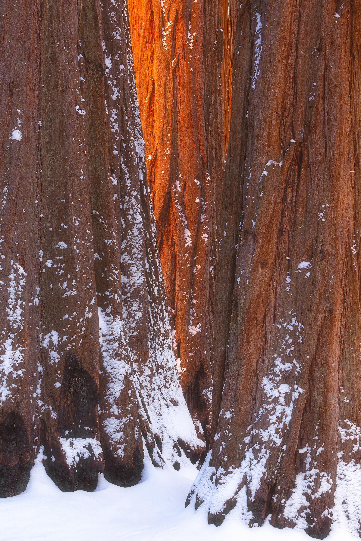 Sequoia Glow.