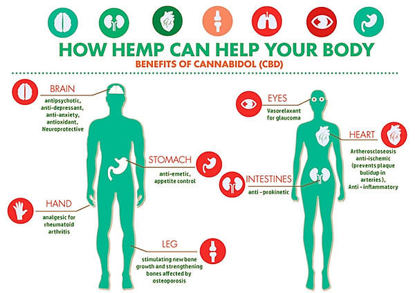 How-does-CBD-work-in-the-body-Learn-Sati