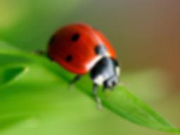 sergio pimenta agronomo ecologia aplicada