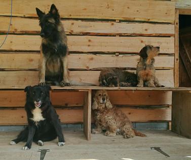 Naska, Jessie, Mister, Roxie et Eluna