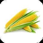 Vegetable: Golden Beauty (Heirloom / Open - Pollinated) Grown with Liqui-Dirt!