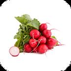 Vegetable: Cherry Belle (Heirloom / Open - Pollinated) Grown with Liqui-Dirt!