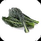 Vegetable: Lacinato�(Heirloom / Open - Pollinated) Grown with Liqui-Dirt!