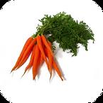 Vegetable: Danvers�(Heirloom / Open - Pollinated) Grown with Liqui-Dirt!