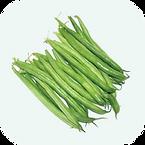 Vegetable: Contender Bush Bean (Heirloom / Open - Pollinated) Grown with Liqui-Dirt!