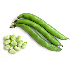 Vegetable: Henderson Lima Bean (Heirloom / Open - Pollinated) Grown with Liqui-Dirt!