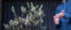 De-Moi-Lemon-tree3-min.jpg