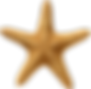 starfish_PNG7.png