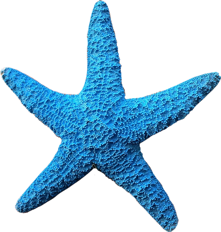 Blue Starfish 4.png