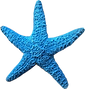 Blue Starfish 4.png