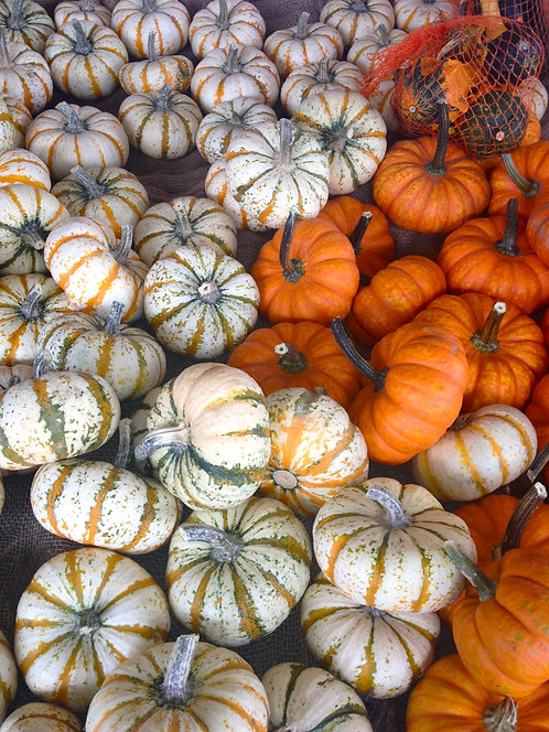 5x7 Print - Mini Pumpkins