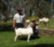 Boer Goat.jpg