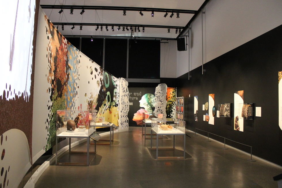 California Academy Of Sciences Presents: Skin, Living Armor, Evolving Identity