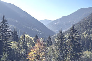 Trees%20and%20Mountains_edited.jpg