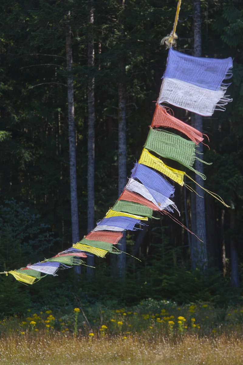 prayer flags Buddha garden.jpg
