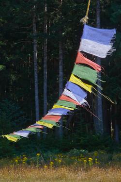 prayer flags Buddha garden.jpg