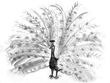 mayurasana - peacock pose