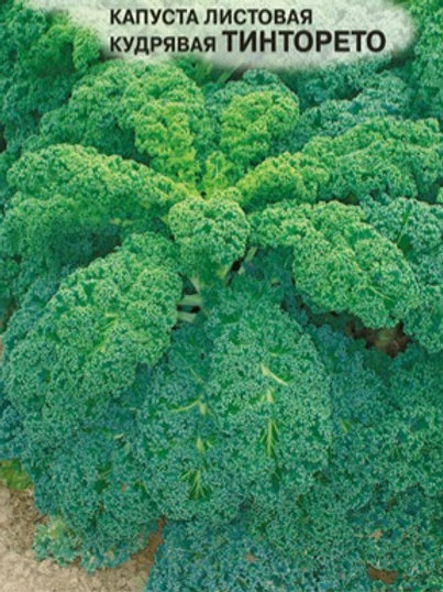 Капуста листовая Тинторето
