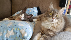 Prince and Tiggie relaxing on the co