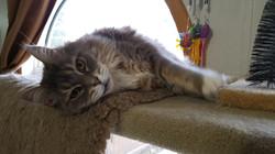 Tiggie sprawled out!