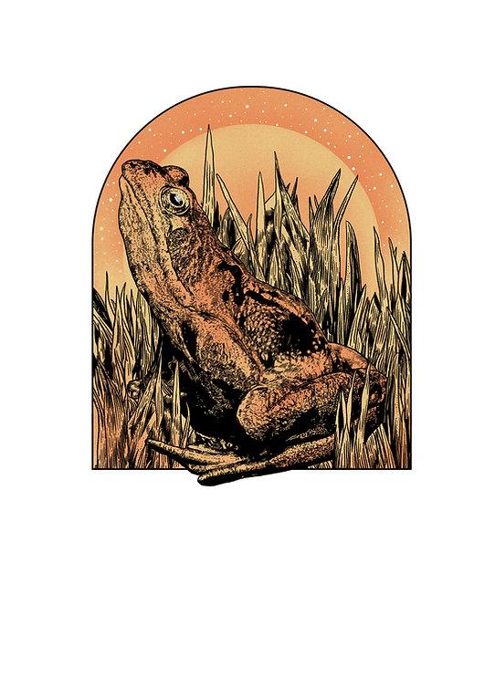 Orange Frog Yoga Clear Frog Only.jpg
