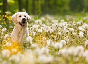 Can Ayurveda and Herbal Remedies Help Your Pet?