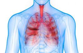 3d-render-of-lungs.jpg