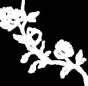 jasmine-flowers-3_edited.png