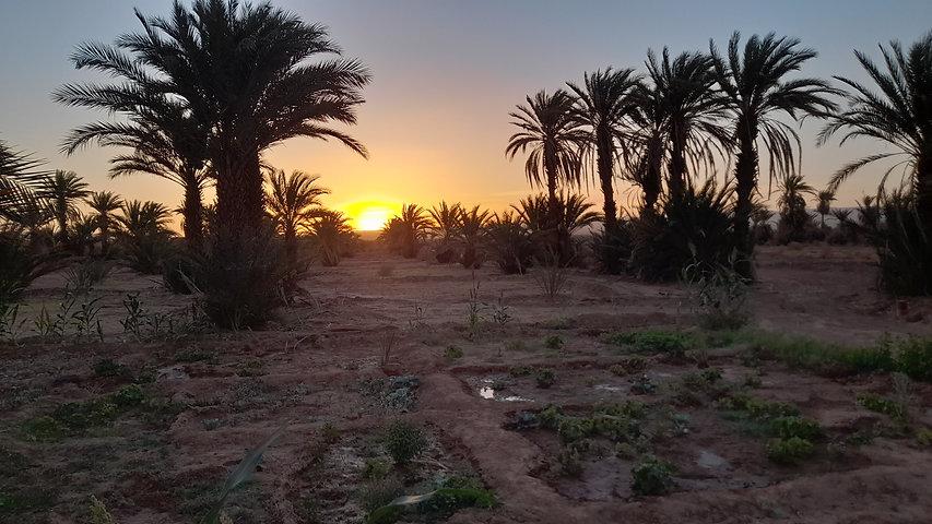 Palmeraie Nasrate Tagounite Maroc.jpg