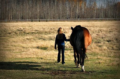 Erlebnisevent, Kinder, Pferde, Stall, Natur, Beziehung, Verantwortung, Freude