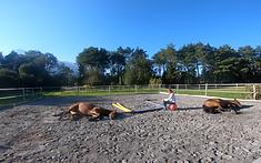 meditieren_pferde 9.9.20.png