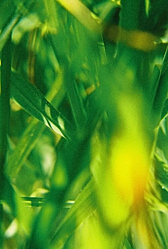 Grass_Rhona_Eve_Clews.jpg