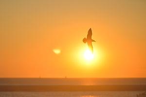 sunset-bird-sunrise-animal.jpg