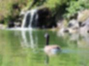 WP Goose.jpg