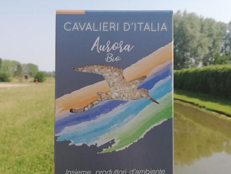 Nasce Aurora: il riso BIO firmato Cavalieri d'Italia.