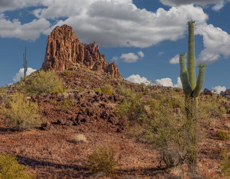 Arizona Saguaro