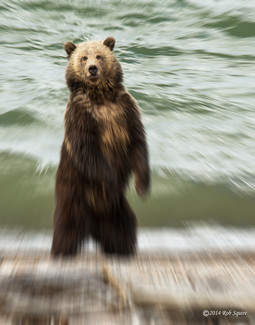 Standing Grizzly