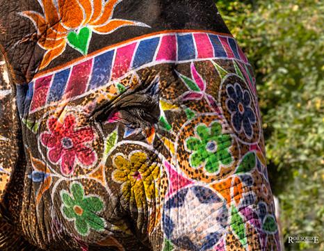 Designs By Elephant