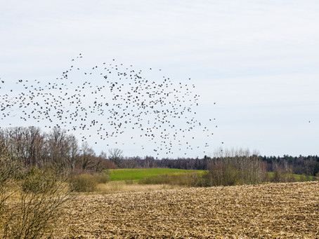 Sub-lethal impacts of pesticides on birds