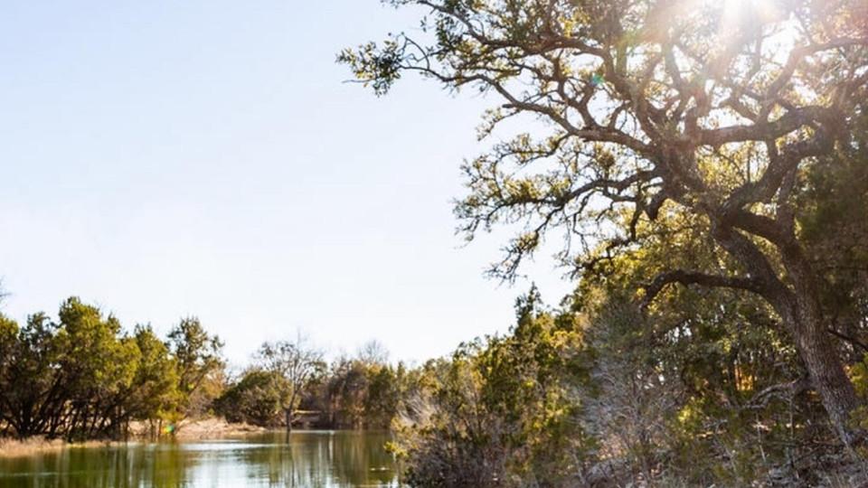 big trees and creek.jpeg